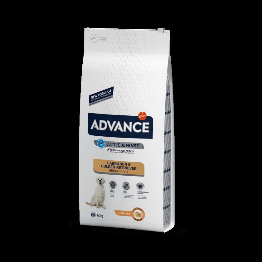 Advance Lavrador & Golden Retriever